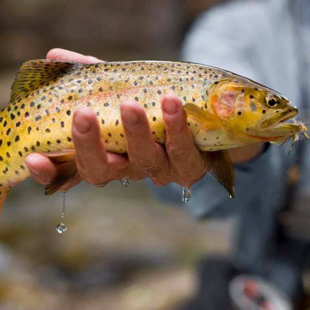 Fly Fishing Western Colorado