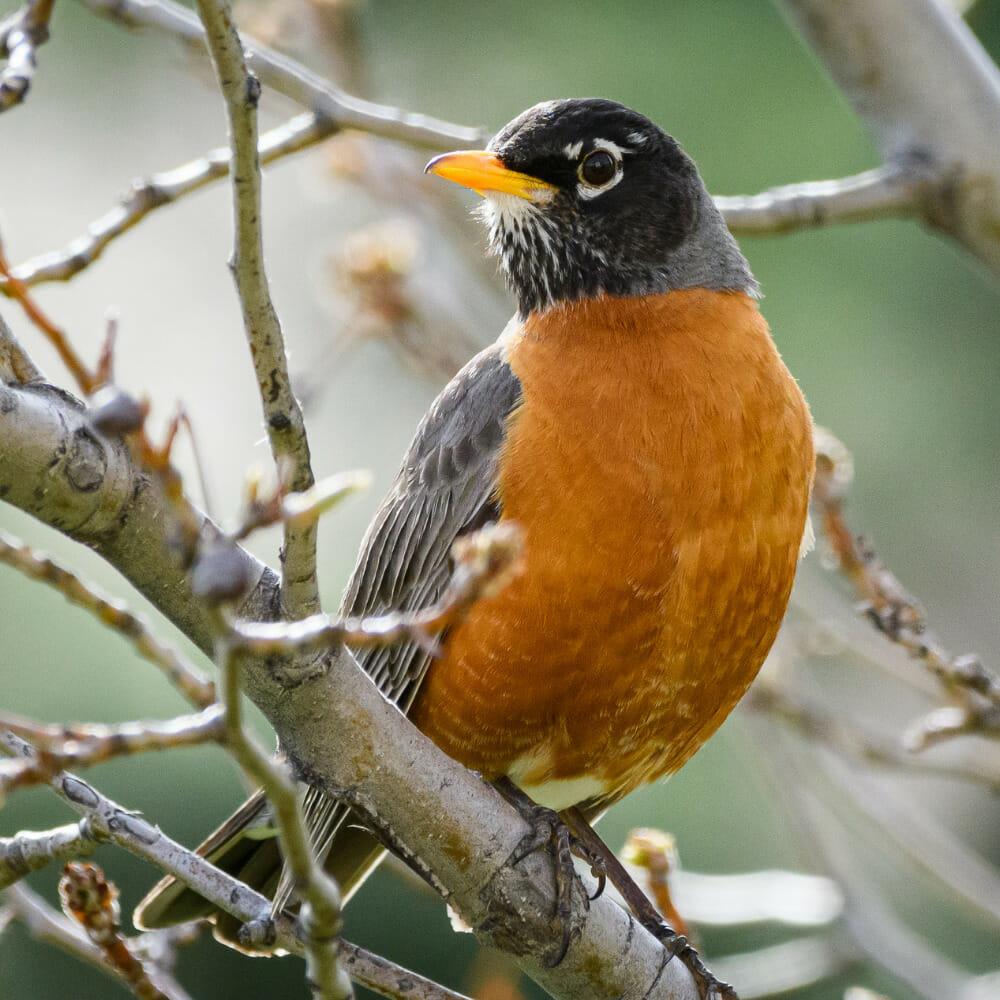 Bird Watching In Western Colorado