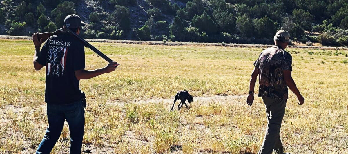 Brookside Gun Dogs At The High Lonesome Ranch