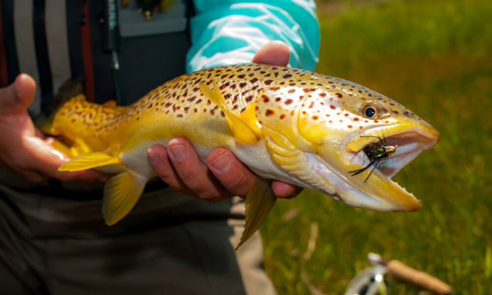 Fly Fishing Gallery
