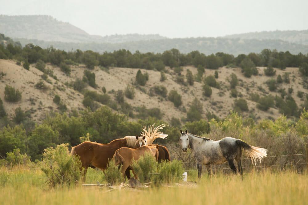 Horse Back Riding Colorado